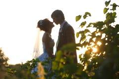 握在背景叶子和日落的柔和的夫妇手 库存图片