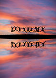 握手和跳跃在日落天空的现出轮廓的十几岁 库存照片