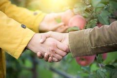 握手的两个人在果树园 免版税库存照片
