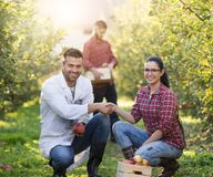 握手的人们在果树园 库存照片