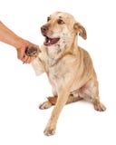 握手的小狗杂种 库存照片