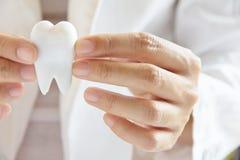 握槽牙的牙科医生 图库摄影