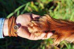握狗的爪子的人的手 免版税库存图片