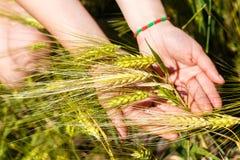 握麦子耳朵的女性手 免版税库存图片