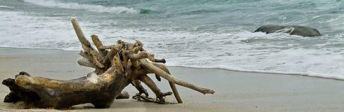 搁浅的树 免版税图库摄影