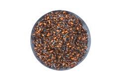 搅动与盐的油煎的地下蚂蚁在碗,可食的昆虫,罕见的食物,因为它不可能是哺养或养殖,北传统 免版税库存图片