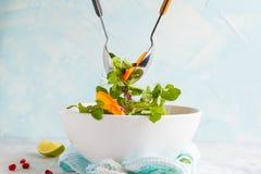 搅动明亮的柿子沙拉 健康绿色素食食物 免版税图库摄影