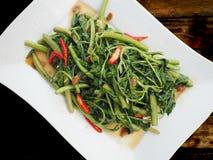 搅动油煎的水含羞草植物用黑豆调味汁和辣椒 图库摄影