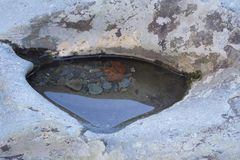 搅浊在与小卵石的一个岩石和被淹没的叶子 库存图片