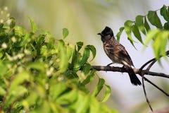 搜寻在自然世界的食物的鸟 库存图片