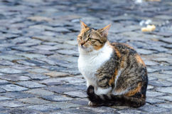 搜寻食物的孤独的猫在一冷的天 库存图片