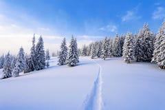 搽粉与雪高冷杉木默默地冥想在冬天寒冷天通过做一条道路的一个冒失鬼 免版税库存照片