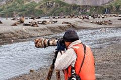 摄影师和海狗 免版税库存照片