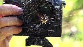 摄影师和蜘蛛接近  股票录像