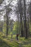摄影师在森林里 免版税库存图片