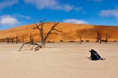 摄影师在非洲 库存照片