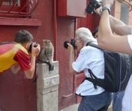 摄影师是对猫模型研究感兴趣 库存图片