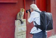 摄影师是对猫模型研究感兴趣 免版税库存照片