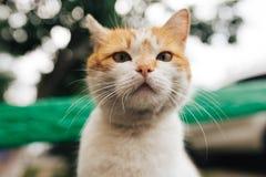 摆在一条老长凳的街道红色猫 免版税图库摄影