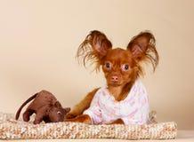 摆在与一个喜爱的玩具的红头发人小狗在演播室 一条小狗在与一只棕色老鼠的一个被编织的地毯说谎 图库摄影