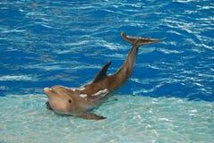 摆在与世故的海豚 库存图片