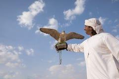 摆在与他的人训练了猎鹰 免版税库存照片