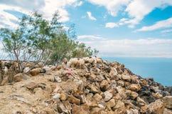摆在与在死海的谷的绵羊的年轻女人 免版税库存图片