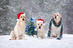 摆在为在雪的圣诞节的三条狗 免版税库存图片