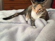 摆在为照片的猫式样小猫 免版税库存照片