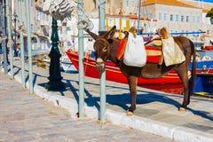 摆在九头蛇海岛希腊的Beautifull驴 免版税库存图片