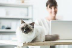 摆在书桌上的可爱的猫 免版税库存照片