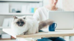 摆在书桌上的可爱的猫 免版税库存图片