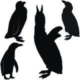 摆在企鹅 库存图片