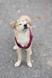 摆在可爱的混杂的品种的小狗户外 库存照片