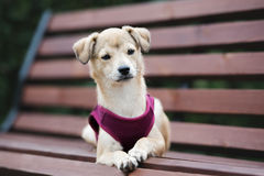 摆在可爱的混杂的品种的小狗户外 图库摄影