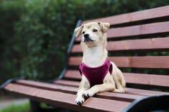 摆在可爱的混杂的品种的小狗户外 免版税库存照片
