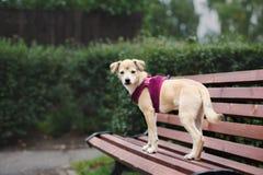 摆在可爱的混杂的品种的小狗户外 库存图片