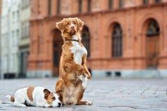摆在城市的两条可爱的狗 库存照片