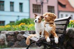 摆在城市的两条可爱的狗 免版税库存照片