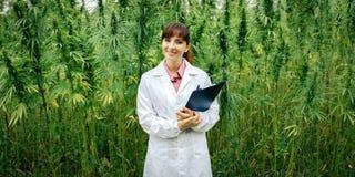 摆在大麻领域的确信的医生 库存图片