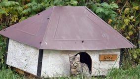 摆在她的狗窝的猫 免版税库存照片