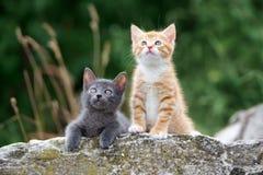 摆在户外在夏天的两只小小猫 免版税库存照片