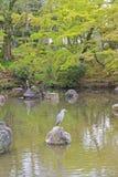 摆在池塘在圆山公园,京都,日本的苍鹭 免版税库存图片