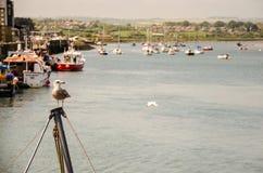 摆在海鸥在诺森伯兰角 免版税库存照片