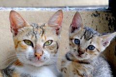 摆在照相机前面的两只逗人喜爱的猫 库存图片