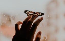 摆在的蝴蝶,姜,手,姿势,窗口 免版税库存照片