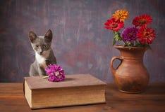 摆在花瓶的花旁边的猫 库存照片