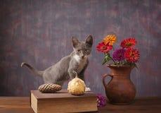 摆在花瓶的花旁边的猫 免版税库存图片