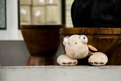 摆在里面照相机的逗人喜爱的乌龟木偶玩具 库存图片