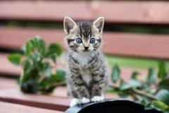 摆在长凳的可爱的小猫 免版税库存图片